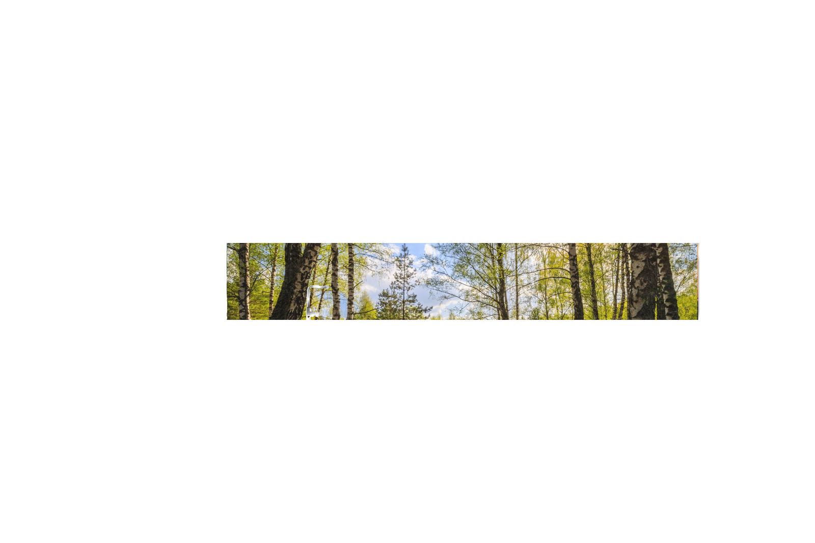 Küche-Echtglas-Rueckwand-Birkenwald