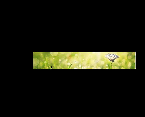 Küche-Echtglas-Rueckwand-Blumenwiese