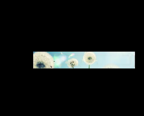 Echtglas-Rueckwand-Blumenwiese-Pusteblumen