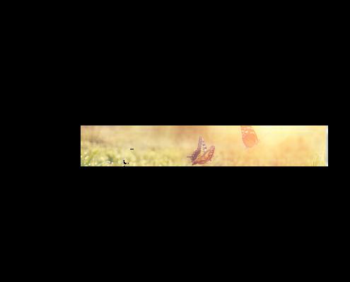 Echtglas-Rueckwand-Blumenwiese-Schmetterlinge