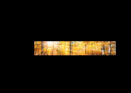 Echtglas-Rueckwand-Herbststimmung