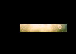 Echtglas-Rueckwand-Pusteblume