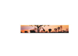Echtglas-Rueckwand-Savanne-Afrika-Silouette-Schatten
